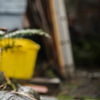 Sprzątanie ogrodu – lepiej zrobić to samemu czy zatrudnić specjalistów?