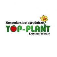 Owoce truskawek – Top Plant